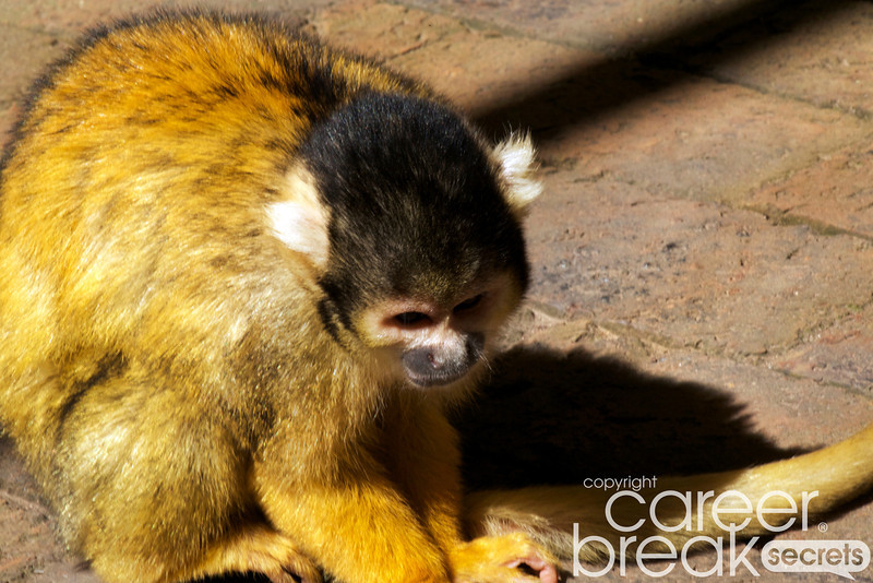 squirrel monkeys, Monkeyland, career break travel adventures in South Africa