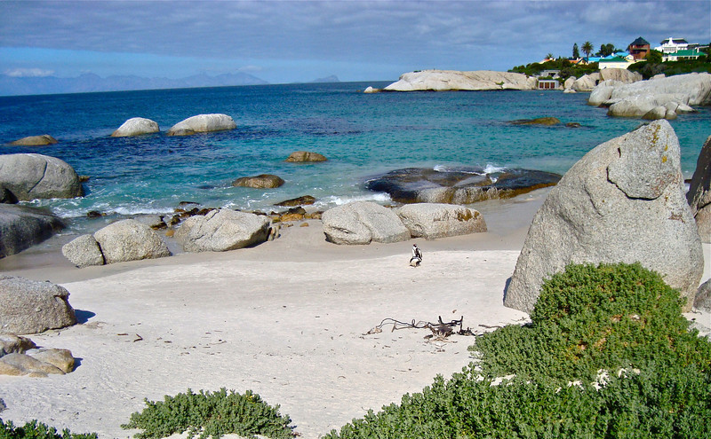 south african penguins, boulders beach, cape town, career break travel adventures in south africa