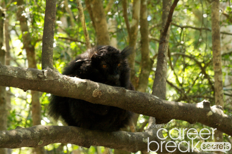 black lemurs, monkeyland, career break travel adventures in South Africa