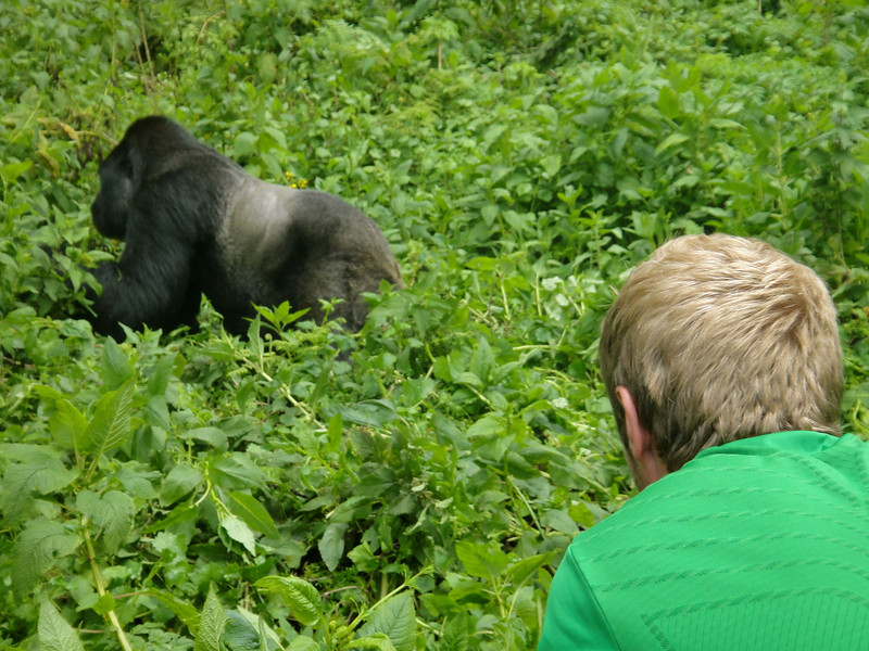 career break travel adventures in rwanda, gorillas, 