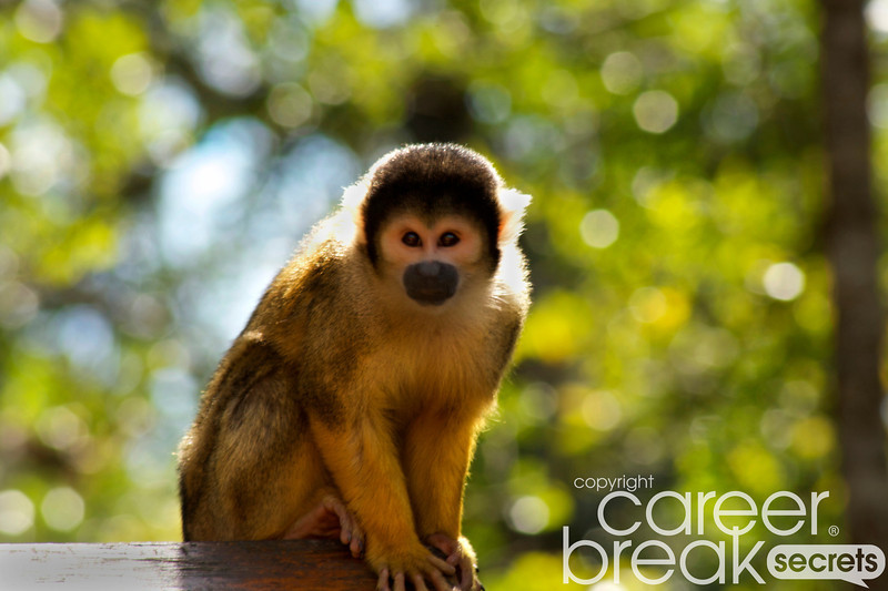 Monkeyland, squirrel monkeys, career break travel adventures in South Africa